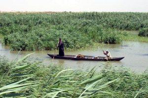 قوانين عراقية جديدة منتظرة لتحويل الأهوار إلى منتجعات سياحية