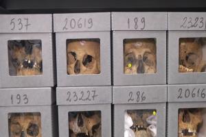 18 ألف جمجمة لجزائريين موجودة في متحف الإنسان في باريس