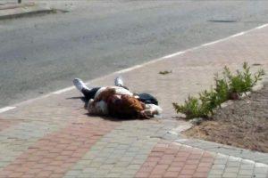 مقتل فتاة فلسطينية برصاص الجيش الإسرائيلي في نابلس وإحتجاز جثتها