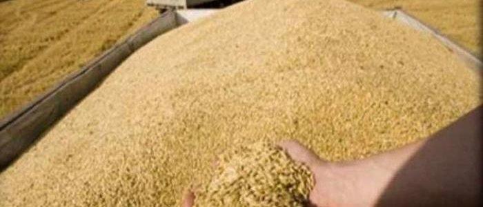 وزير الزراعة ينفي فكرة زراعة القمح بالتبريد ضمن مصر