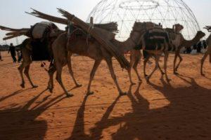 55 مليون دولار حصيلة جوائز مهرجان الملك عبد العزيز للإبل المقام في المملكة العربية السعودية