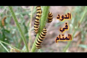 تفسير حلم الديدان في المنام ومعناه ودلالاته