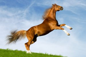تفسير حلم الحصان الميت في المنام