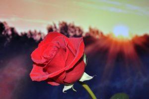 تفسير حلم قطف الزهور في المنام