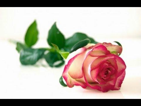 تفسير حلم قطف الزهور في المنام نسائم نيوز