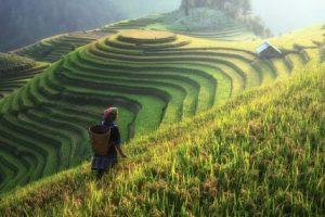 تفسير حلم المزرعة الخضراء في المنام