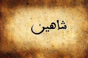 معنى اسم شاهين في اللغة العربية