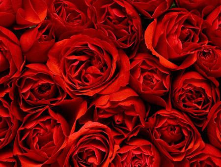 تفسير حلم اللون الأحمر في المنام نسائم نيوز