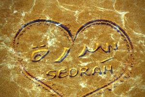 معنى اسم سدرة في اللغة العربية