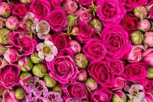 تفسير رؤية الزهور في المنام
