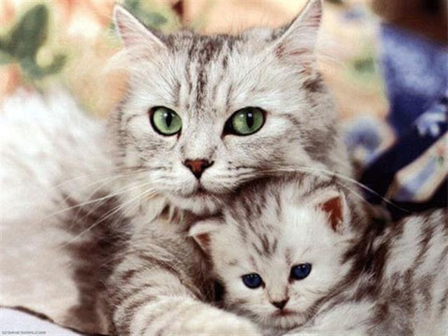 تفسير حلم رؤية القطط في المنام