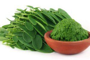 فوائد عشب الموربنجا