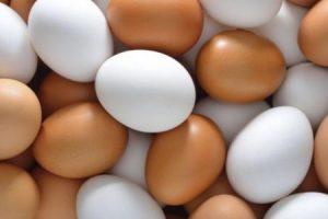 تفسير حلم رؤية البيض فى المنام