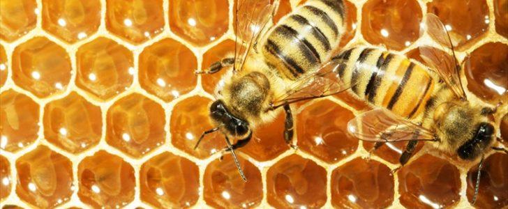 عسل النحل وتعريفه وفوائده