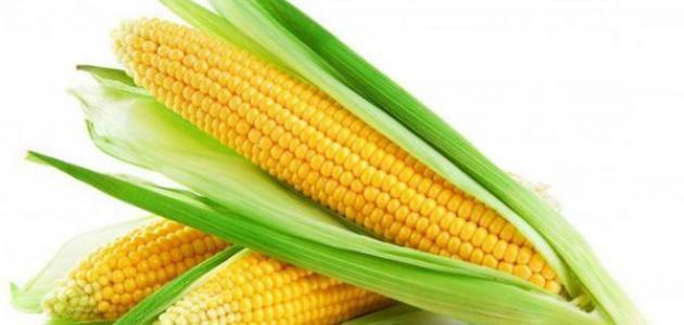 الذرة الصفراء وفوائدها