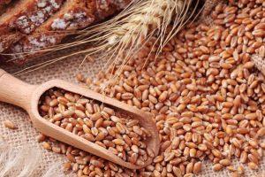 فوائد القمح ومكوناته