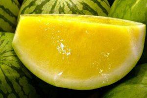 البطيخ الأصفر أهميته وفوائده