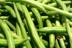 الفاصوليا الخضراء وفوائدها