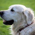 تفسير حلم رؤية الكلب فى المنام