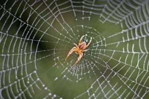 تفسير حلم رؤية العنكبوت في المنام
