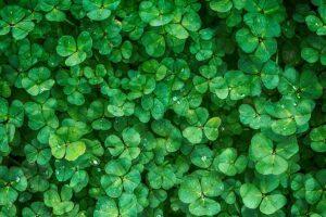 تفسير حلم رؤية الزرع الأخضر في المنام لفقهاء التفسير