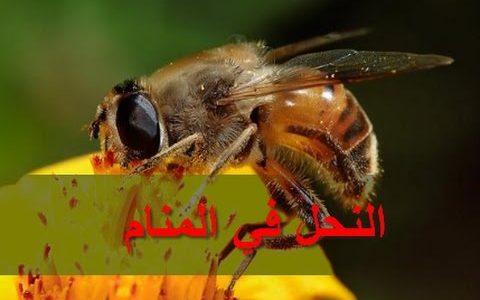 تفسير رؤية النحل في المنام لابن سيرين