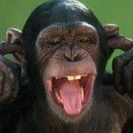 تفسير رؤية القرد في المنام لابن سيرين والنا بلسي