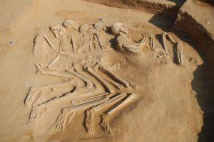 العثور على 5 هياكل عظمية لشباب.. تعود إلى الألف السادس قبل الميلاد