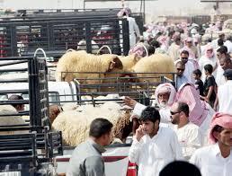 أمانة منطقة المدينة المنورة تعلن عن جاهزيتها لاستقبال عيد الأضحى المبارك