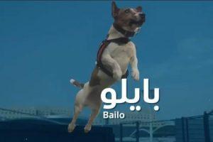 """""""الجمارك"""" تنشر فيديو للكلب """"بايلو"""" المدرب للكشف عن المصابين بفيروس كورونا في المنافذ"""