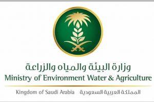 وزارة البيئة: شروط للحصول على إعانة صغار مربي الماشية شهريًا