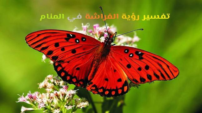 تفسير رؤية الفراشة في المنام لابن شاهين